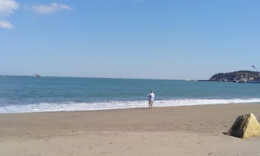海のチワワーズ