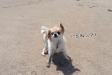 浜辺のハヤテ2