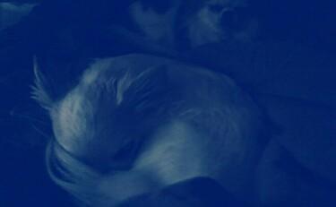 寝入るチワワーズ