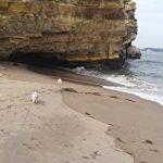 海を散歩中のチワワーズ