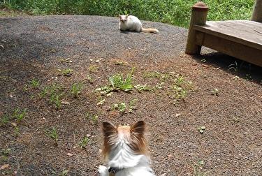 猫とハヤテ3