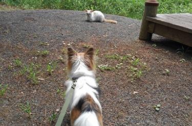 猫とハヤテ4