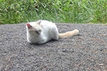 猫とハヤテ6