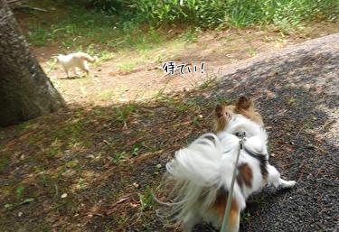 猫とハヤテ7