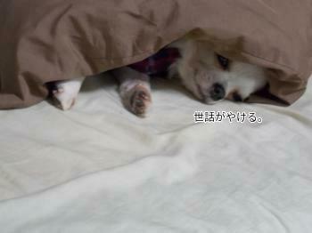 寝てるさくら