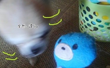 おもちゃを選ぶハヤテ5