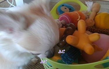おもちゃを選ぶさくら