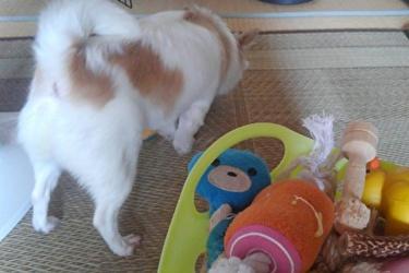 おもちゃを選ぶさくら4