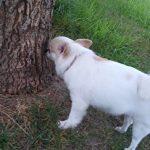 木の匂いをかぐさくら