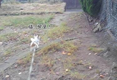 猫を追いかけるハヤテ