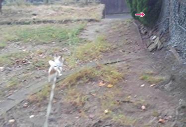 猫を追いかけるハヤテ2