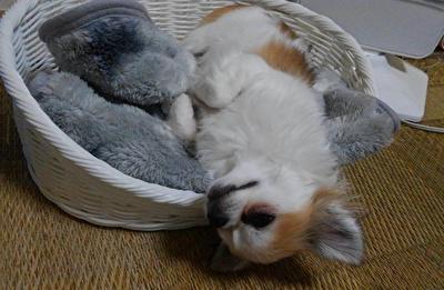 眠るハヤテ