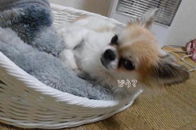 起き上がるハヤテ
