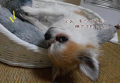 眠そうなハヤテ3