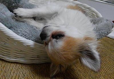 眠そうなハヤテ4