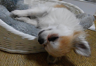 眠そうなハヤテ5