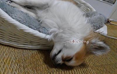 眠ったハヤテ