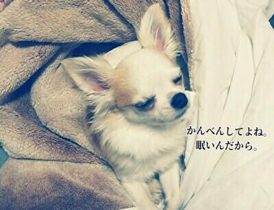 眠ってるさくら