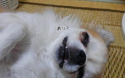 口を開けて寝るハヤテ4