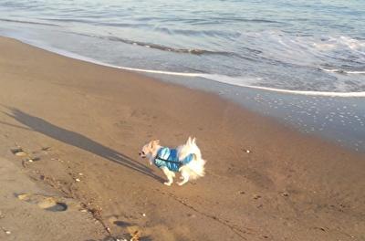 砂浜をダッシュするさくら