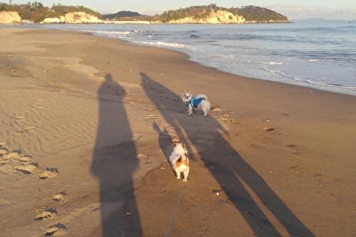 チワワーズと影の私たち