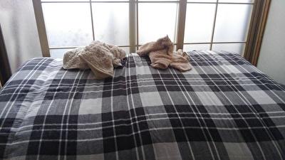 ハヤテのお気に入り毛布