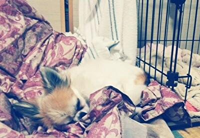 ハウスの横で寝てるハヤテ