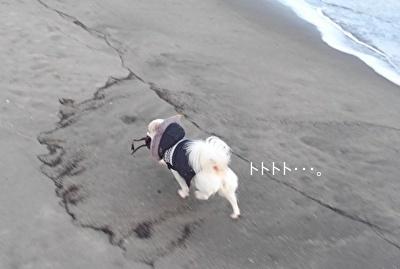 海草を持って走るさくら