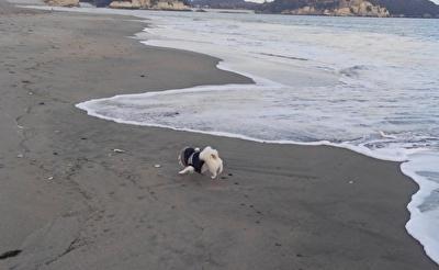 海を走るさくら
