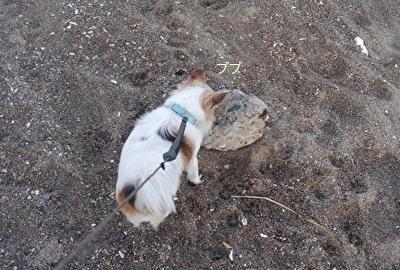 石に執着するハヤテ