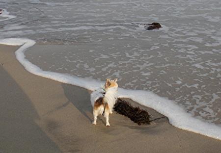 海を散歩するハヤテ2