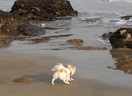 海を散歩するさくら2