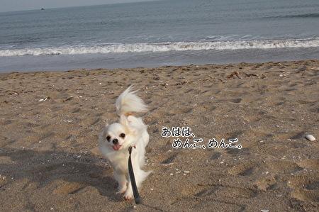 海を散歩するさくら6