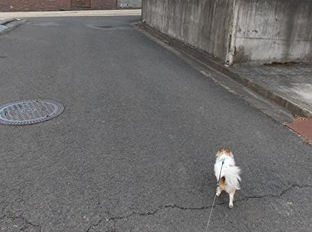 散歩中のハヤテ11