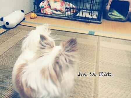ヒヨコとさくら11