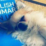 英語の本を枕に眠るハヤテ