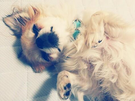 ハヤテの寝顔3