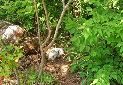 森に入り込むハヤテ2