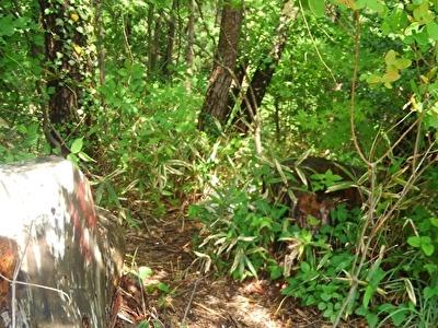 森に入り込むハヤテ4
