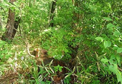 森に入り込むハヤテ