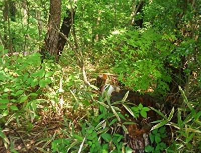 森に入り込むハヤテ3
