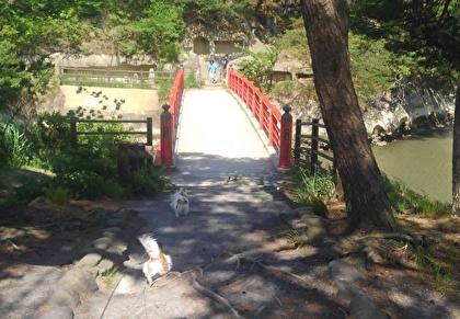 松島とチワワーズ2