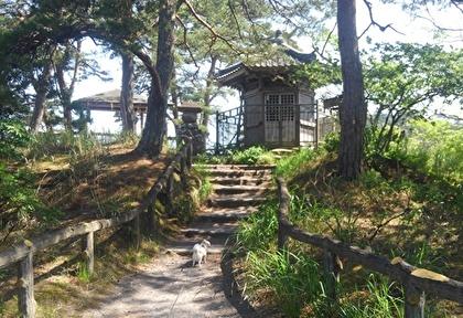 松島とさくら