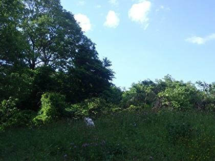 草原にさくら