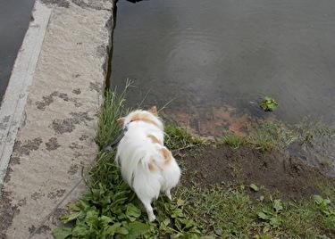 池を見つけたさくら2