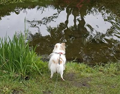 池を見つけたさくら