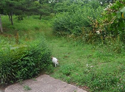 藪に入ってくハヤテ2