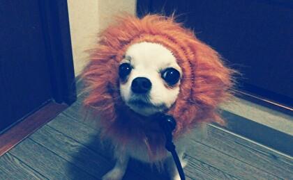 ライオンさくら