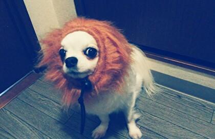 ライオンさくら3