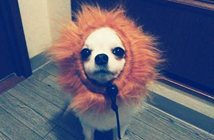ライオンさくら4